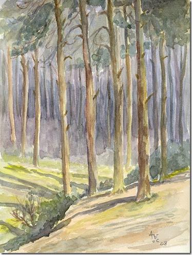 Branksome Woods, Poole, Dorset
